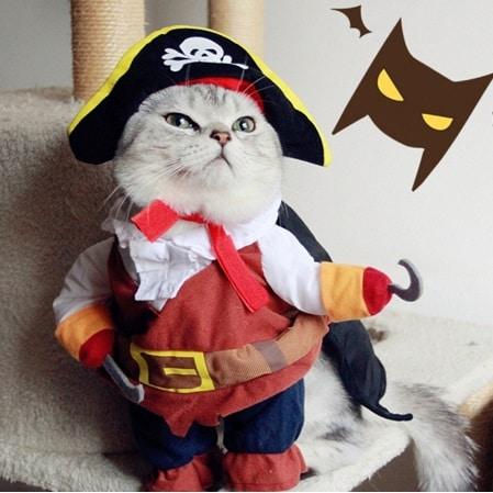 accesorios gato disfraz pirata