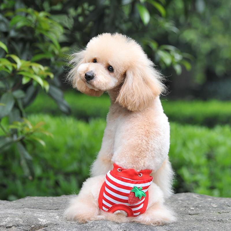 accesorios perro pañal