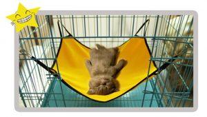 cama gato hamaca