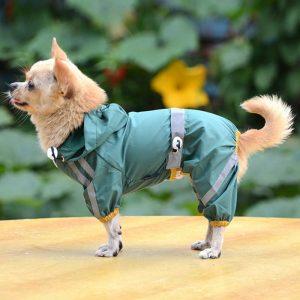 chubasquero perro
