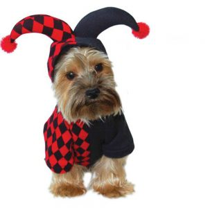 disfraz-arlequin-perro-aliexpress