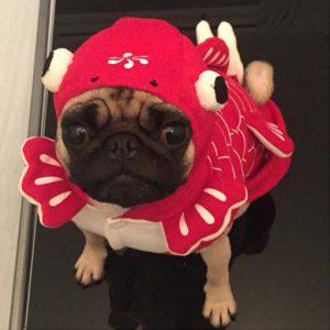 disfraz-carpa-perro-aliexpress
