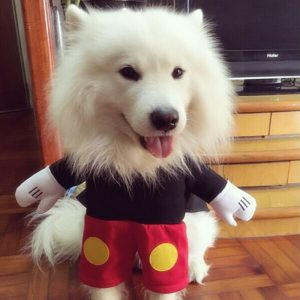 disfraz-mickey-mouse-perro-aliexpress