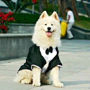 disfraz-novio-perro-aliexpress