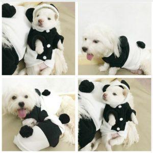 disfraz-oso-panda-perro-aliexpress