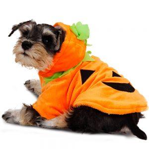 disfraz-perro-calabaza-aliexpress