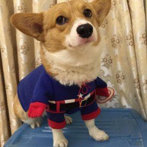 disfraz-perro-capitan-america-aliexpress