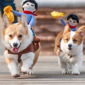 disfraz-perro-cowboy-aliexpress