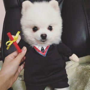 disfraz-perro-estudiante-aliexpress