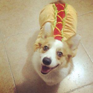 disfraz-perro-hot-dog-aliexpress