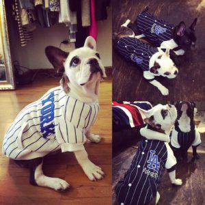 disfraz-perro-jugador-beisbol