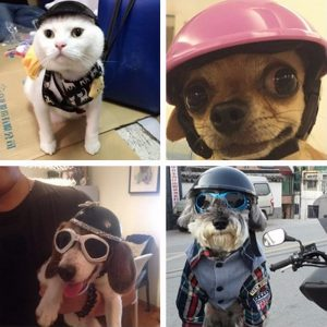 disfraz-perro-motero-aliexpress