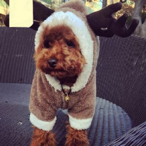 disfraz-reno-aliexpress-perro