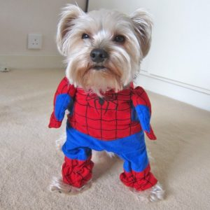 disfraz-spiderman-perro-aliexpress
