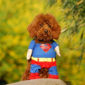 disfraz-superman-aliexpress-perro