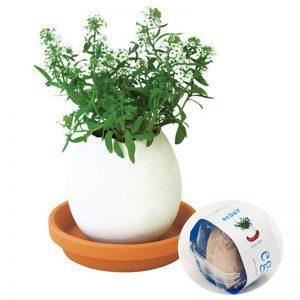 huevo planta